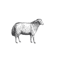 grass fed lamb delivery uk